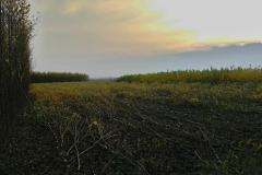 5100 stromů dole bude asi 180 prm