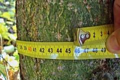 45cm obvod 4 leteho