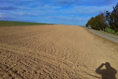 Hektarová-výsadba-u-Přepych