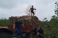 Patnáct metrů dřeva