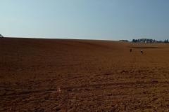 Výsadba na klíč 2018 hektary
