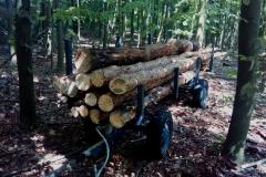 Vyklízíme náš les od souší