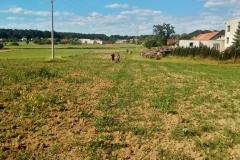 Hektarová plantáž v Holicích před údržbou