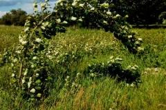 Velké pruty se na jaře díky olistění ohýbají