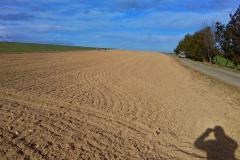 Hektarová výsadba u Přepych