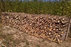 Připravujeme dřevo z jt