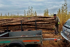 Skoro dva metry dřeva