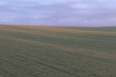 Huntování půdy