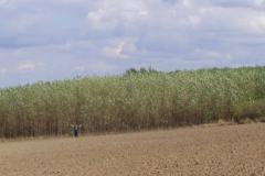 Plantáž - Hořánka