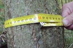 Nejsilnější strom