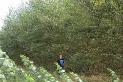 Pod lesem