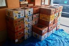 22000 ks tříděných řízků je přes 40 banánových beden