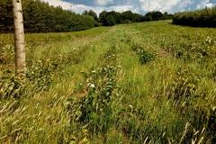 Výmladky z pokácené plantáže už valí