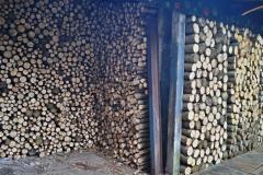 Japonský topol - dřevo 2