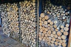 Japonský topol - dřevo