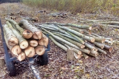 Stromy nakládáme na dvakrát