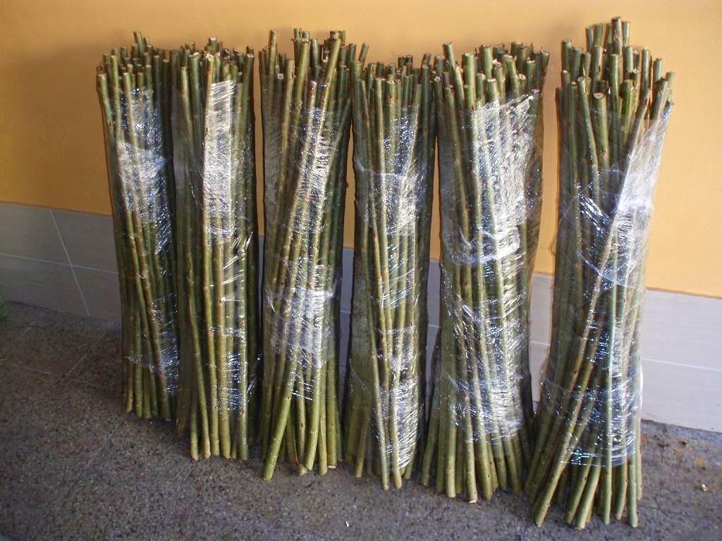 Sadba v kůlech - spodní průměr cca 2,5 - 4 cm, délka 1 m